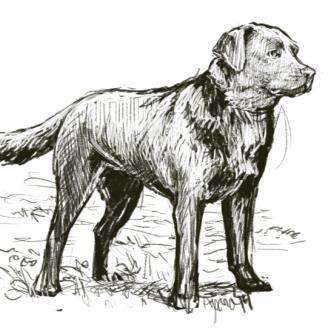dogpractice